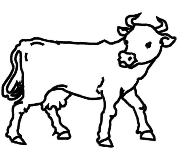 Dairy Cow Outline Coloring Pages