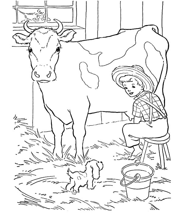 Dairy Cow Produce Fresh Milk Coloring Pages