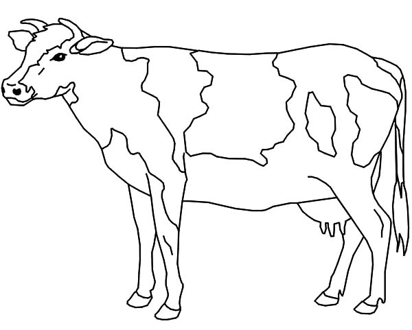 Dairy Cow Ready to be Milk Coloring Pages