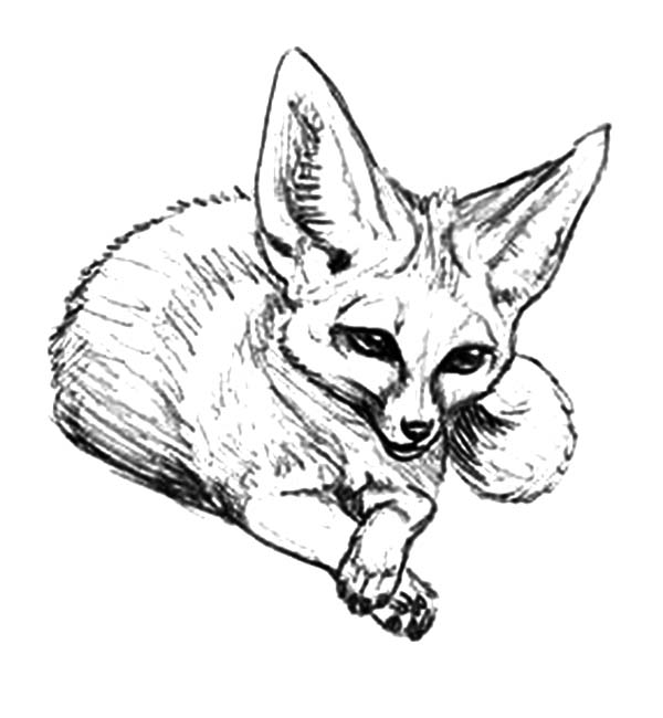 Desert Fox Coloring Pages for Kids