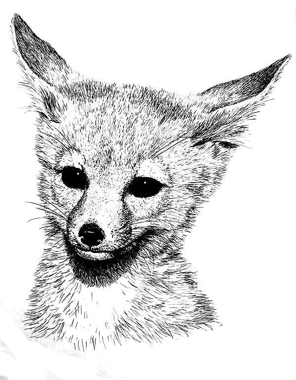 desert fox coloring pages - Fox Coloring Pages