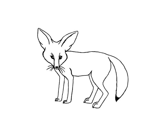 Desert Fox Outline Coloring Pages