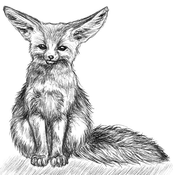 Desert Fox Painting Coloring Pages