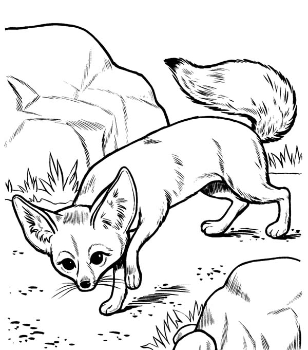 Desert Fox Slip Between Rocks Coloring Pages