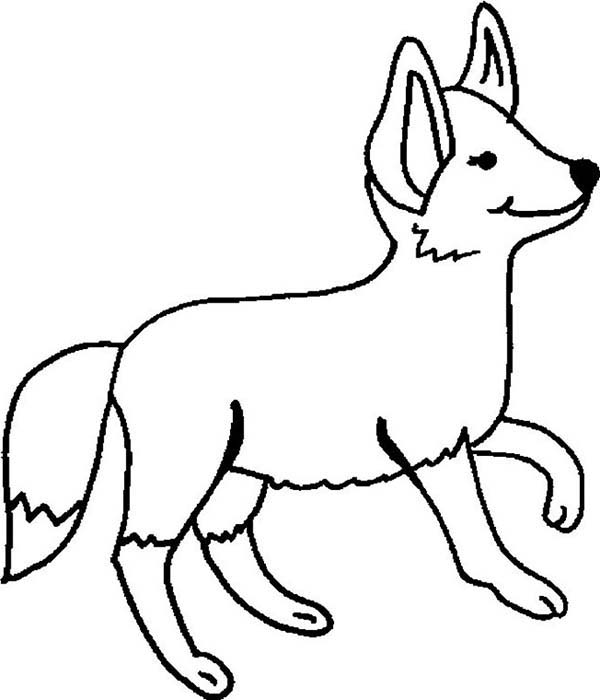 g fox co coloring pages - photo #15