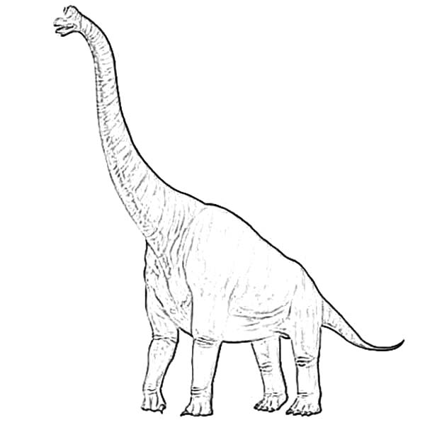 Diplodocus Standing Tall Coloring Pages