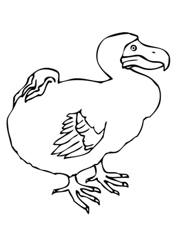Dodo Bird Picture Coloring Pages