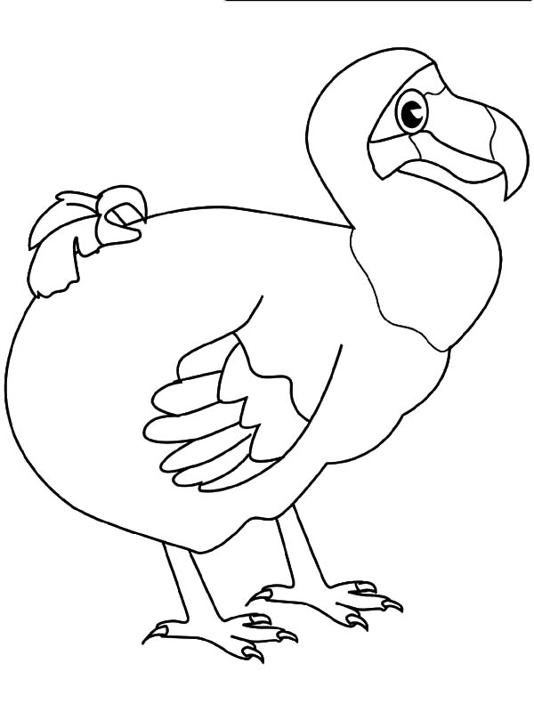 Dodo Bird Unique Beak Coloring Pages