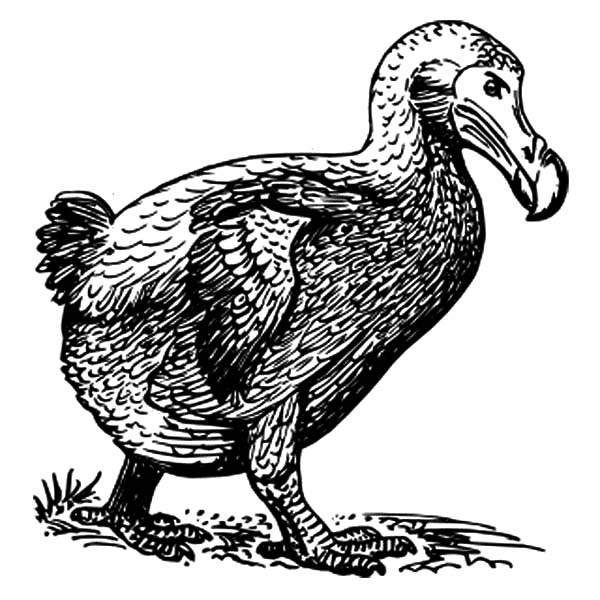 Dodo Bird Walking Around Coloring Pages