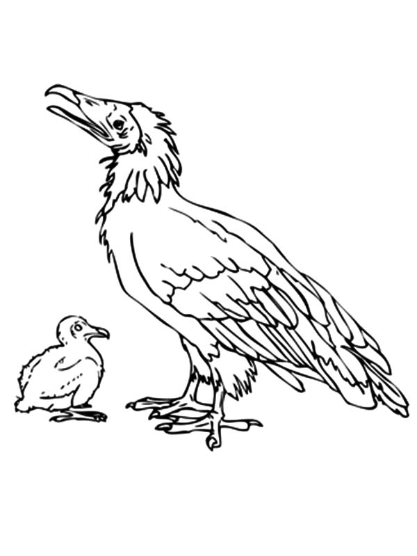 Dodo Bird with Chick Coloring Pages