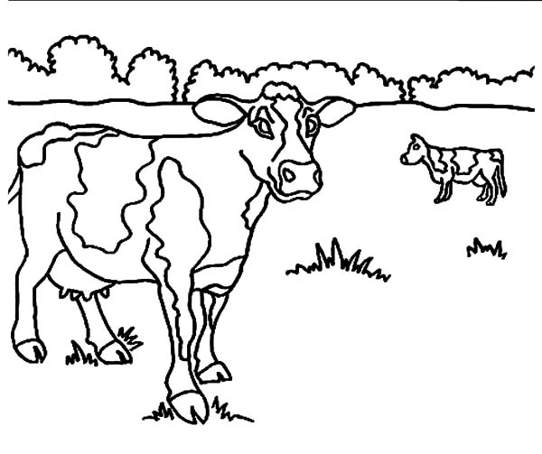 Cow On Meadow Cow On Meadow Coloring Pages