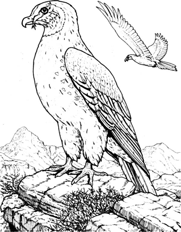 Falcon Bird Natural Habitat Coloring Pages