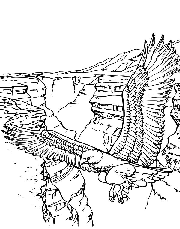 Falcon Bird Over the Canyon Coloring Pages