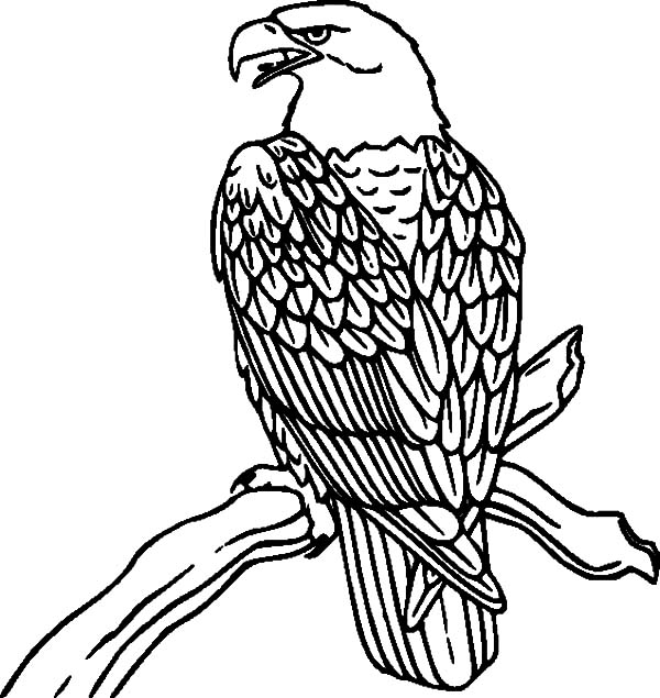 Falcon Bird Perched on Branch Coloring Pages
