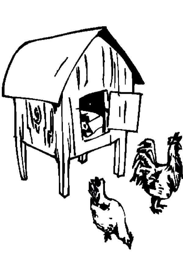 Finding Food in Front of Chicken Coop Coloring Pages