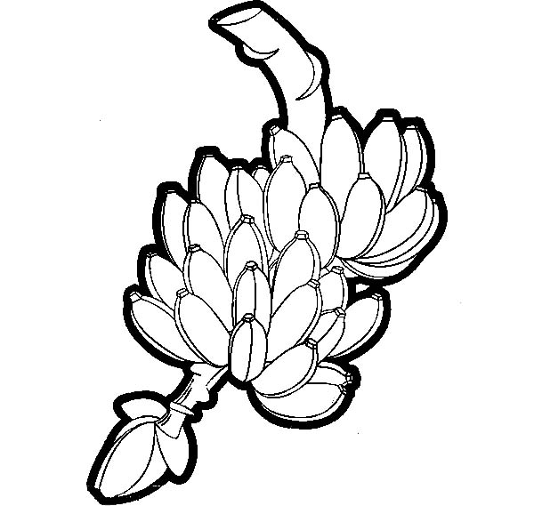 Harvest Banana Bunch Coloring Pages