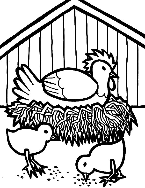 Hen Hatching Egg in Chicken Coop Coloring Pages
