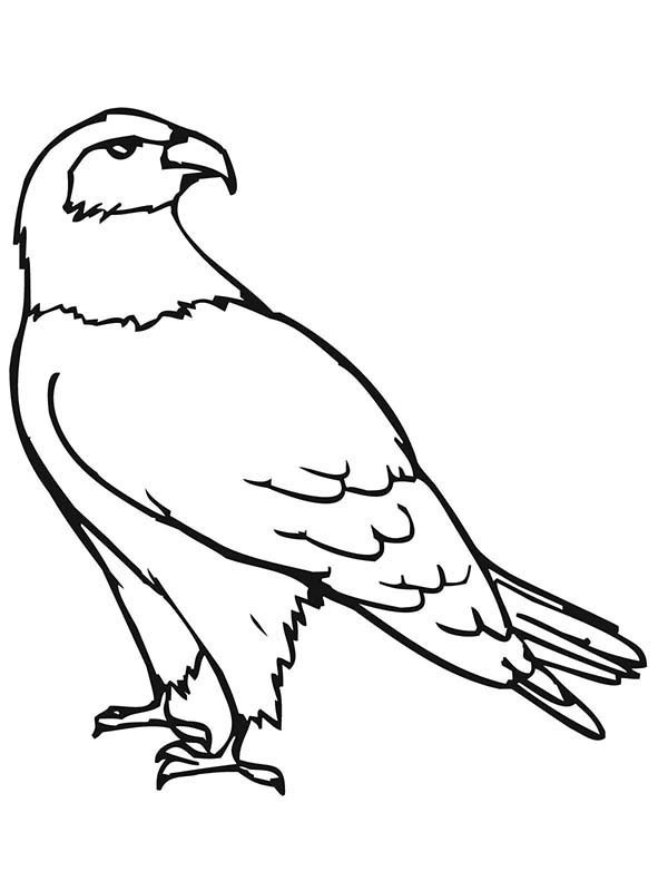 falcon coloring pages - photo#26
