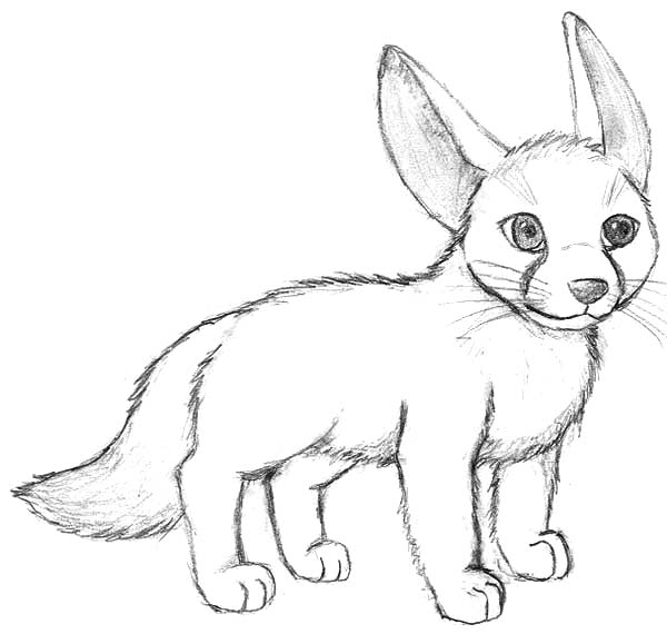 Little Desert Fox Coloring Pages