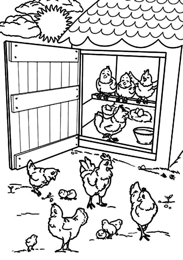Open Chicken Coop Door Coloring Pages