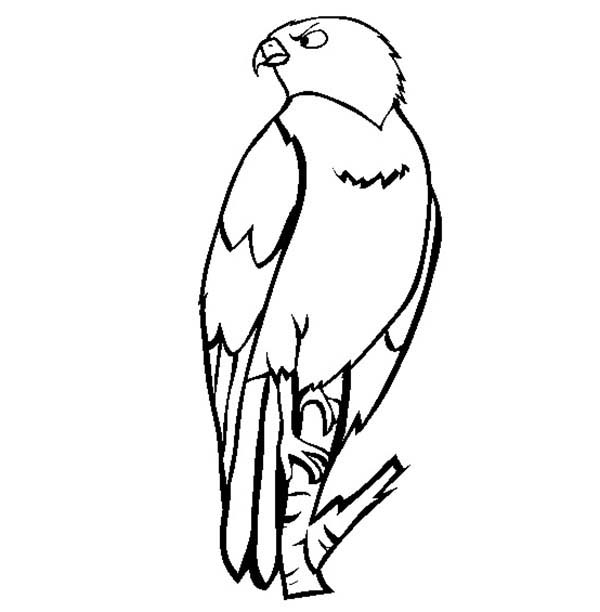 Perched Falcon Bird Coloring Pages