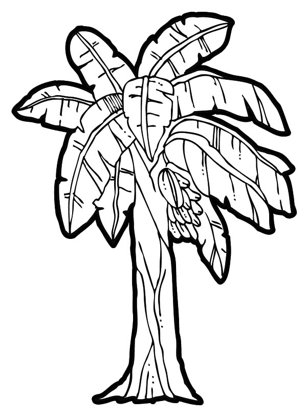 Picture Of Banana Bunch Coloring Pages Plant 001
