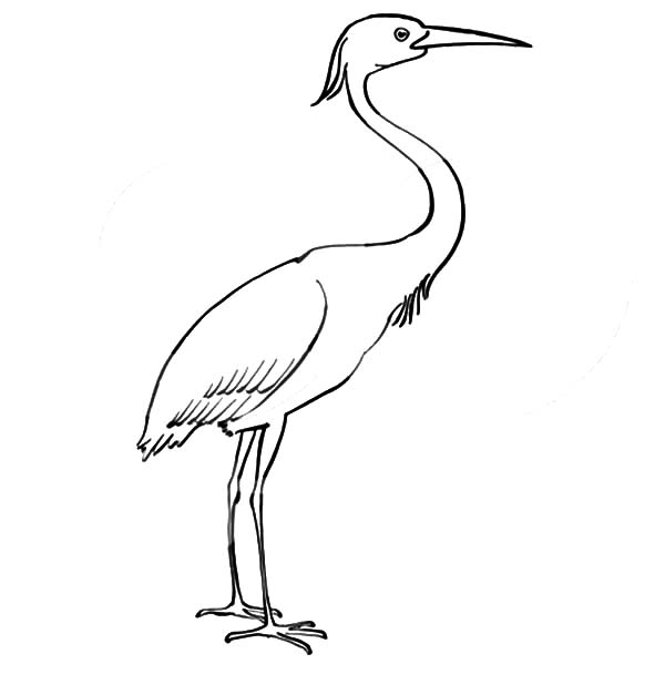 Preschool Kids Crane Bird Coloring Pages