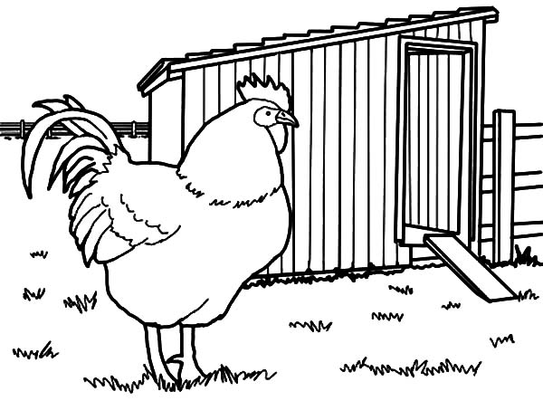 Rhode Island Rooster Chicken Coop Coloring Pages