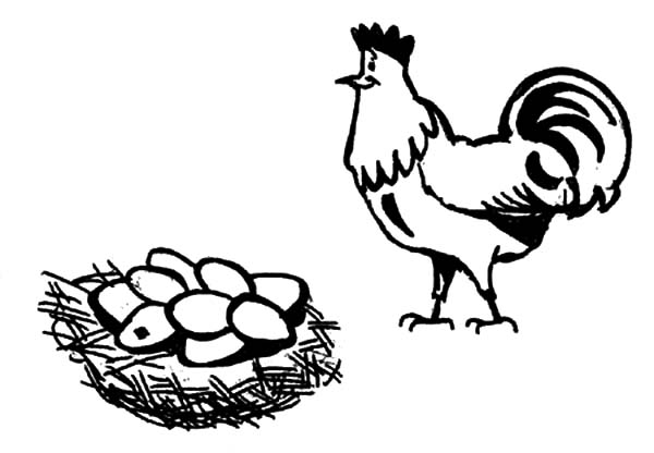 Rooster Guarding Chicken Egg Coloring Pages