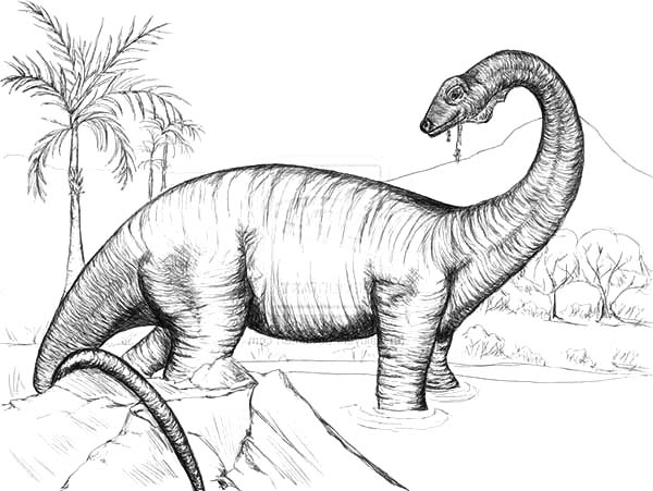 Sketch of Diplodocus Coloring Pages