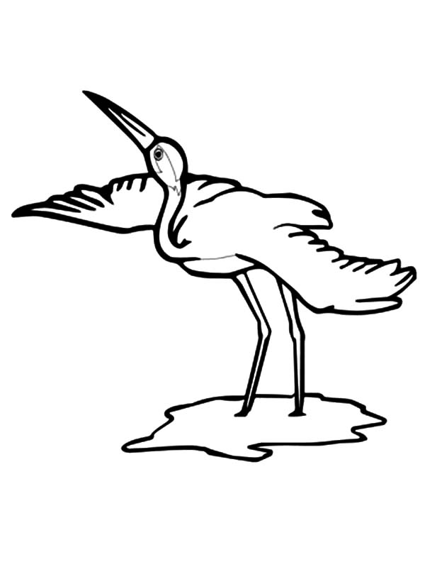 Whooping Crane Bird Coloring Pages