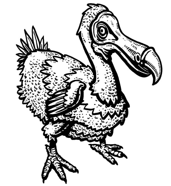 Wildlife Dodo Bird Coloring Pages