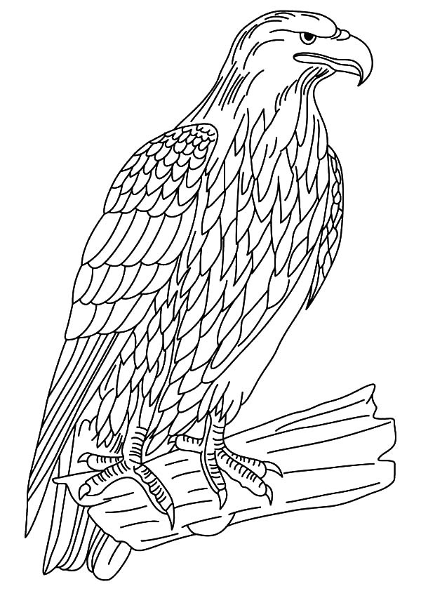 falcon coloring pages - photo#22