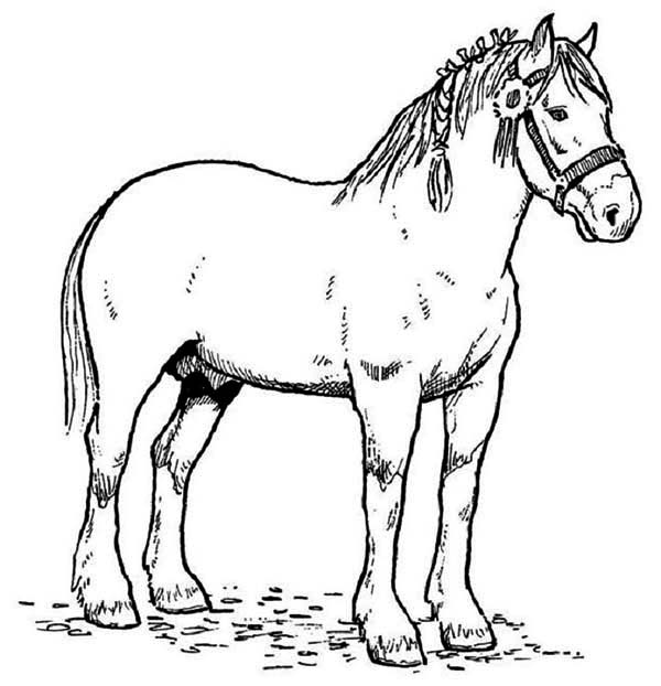 Horse Race Champion in Horses Coloring Page - NetArt