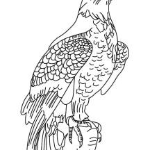 Bald Eagle | NetArt