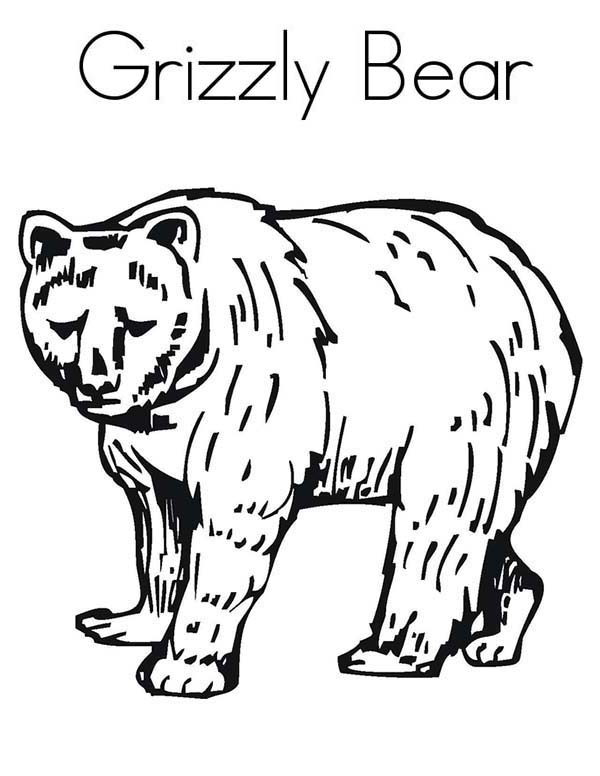 Enormous Grizzly Bear Coloring