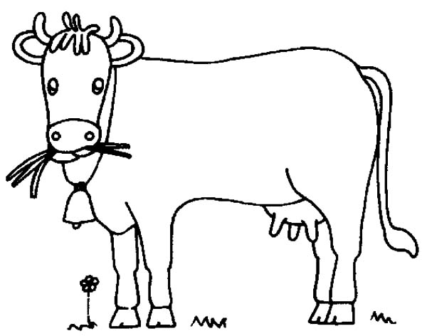 How to Draw Dairy Cow Coloring Pages - NetArt