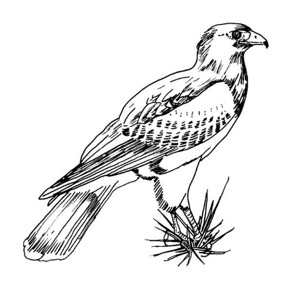 Falcon Bird | NetArt